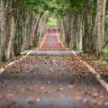 zmiana nawyku i prostowanie ścieżki